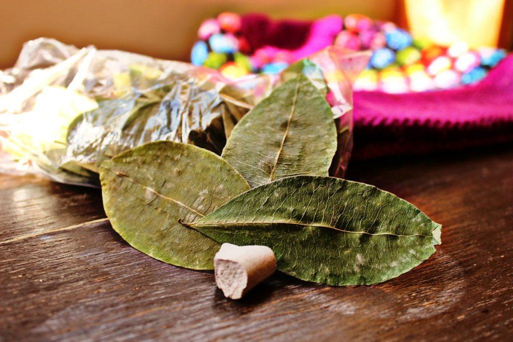 La feuille de coca utilisée dans la médecine traditionnelle des Andes