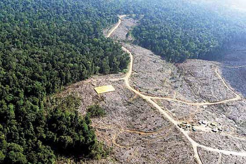 Célèbre Colombie-Pérou : Engagement mutuel contre la déforestation  SR45