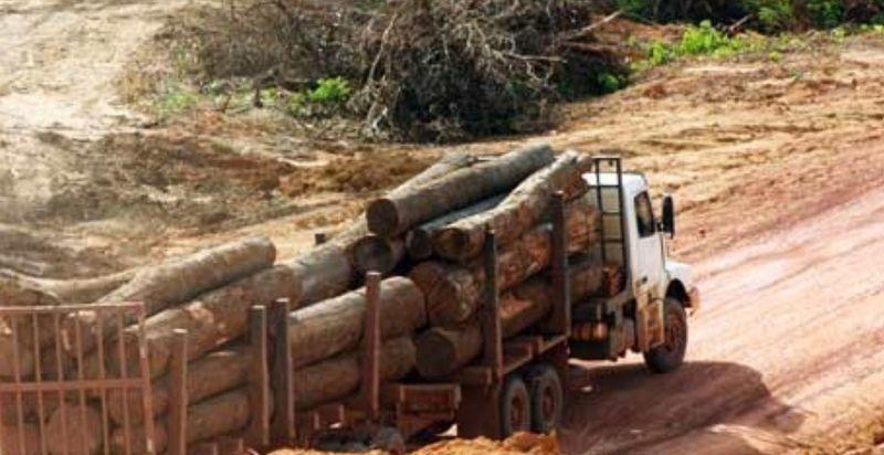 culture soja déforestation
