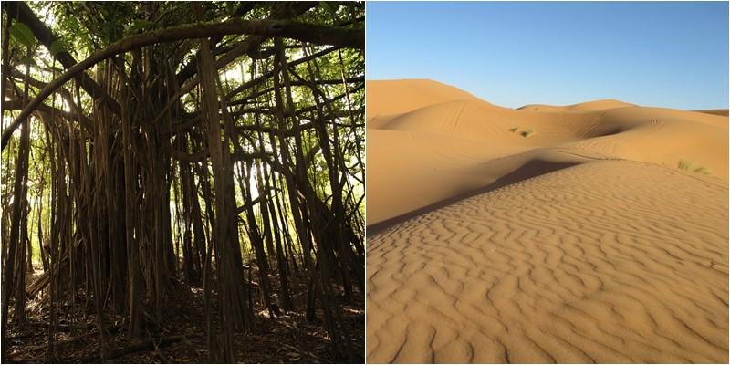 Le sable du Sahara, un élément indispensable à la fertilisation de l'Amazonie.