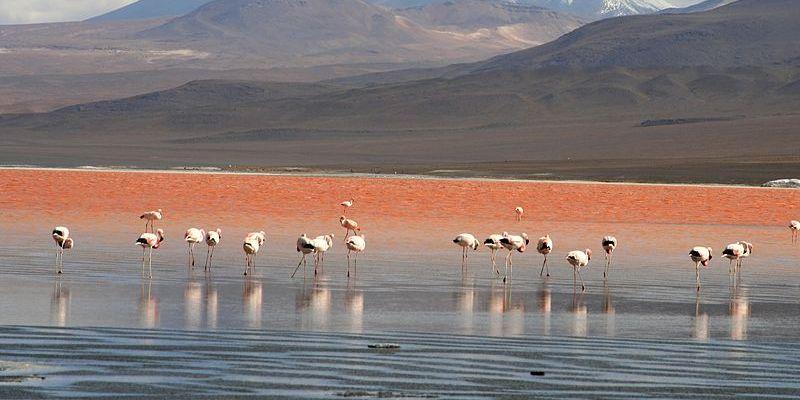 Laguna Colorada, Uyuni, Bolivia Carlos Adampol Galindo (wikipedia)