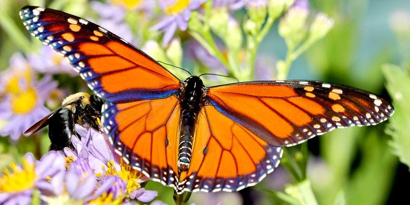mexique le papillon monarque la flamboyante robe orange fait son retour annuel - Image De Papillon