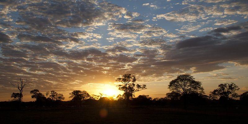 Le Pantanal, joyau environnement d'Amérique du Sud