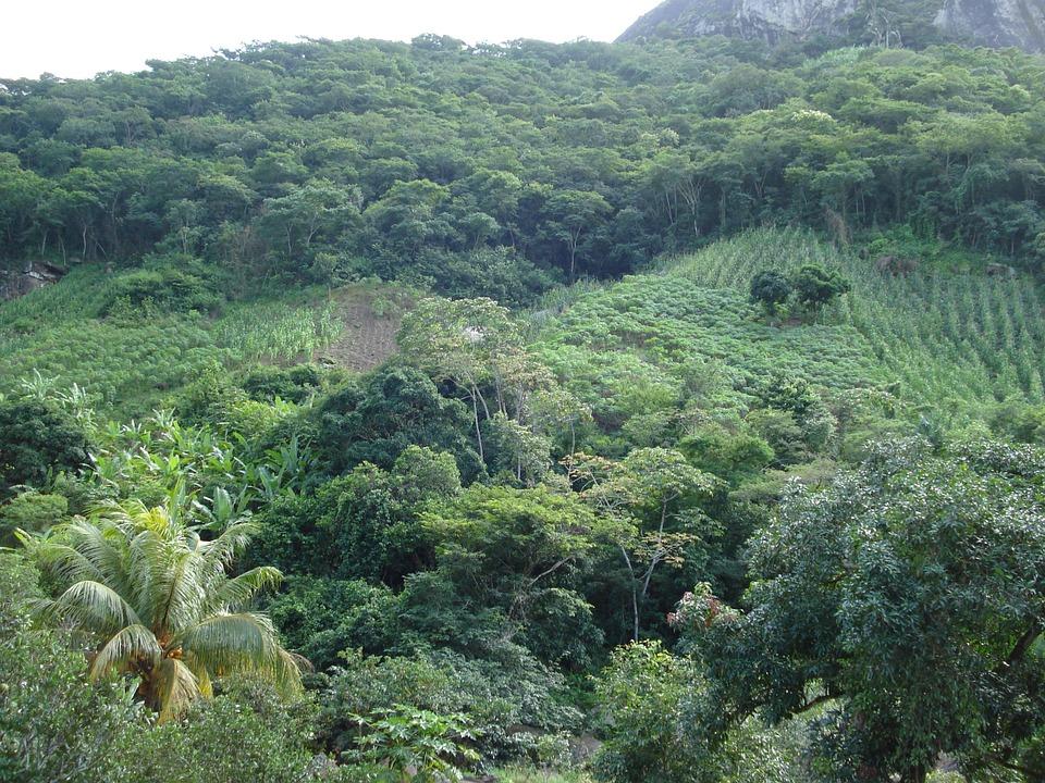 """Au Brésil, la déforestation s'intensifie pour permettre l'agriculture et l'élevage, y compris en Amazonie, """"Poumon vert"""" de l'humanité."""